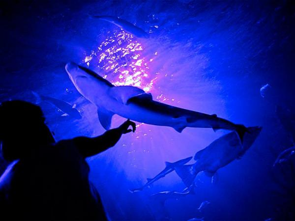 , au c?ur du Centre Commercial Val d?Europe, l?Aquarium Sea Life ...